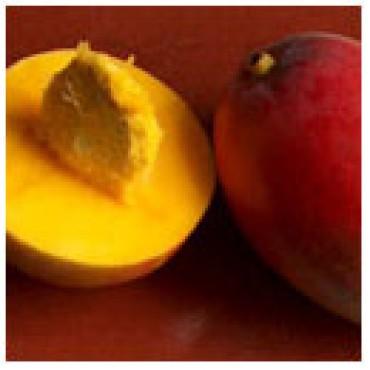White Mango Balsamic, 10 L Jugs.