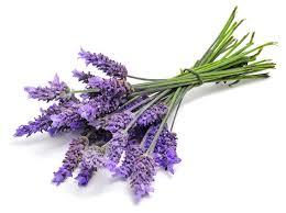 Lavender Dark Balsamic, 100 ml Case Pack 24 Bottles.