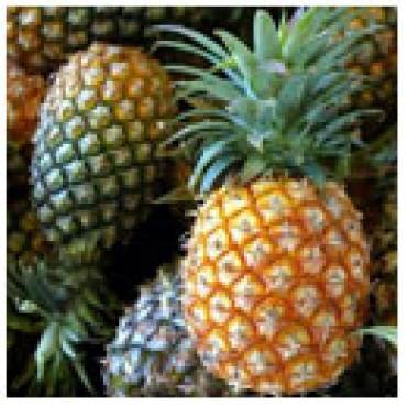White Pineapple Balsamic Vinegar, WITH LABELS Case of 12 375mL Bottles
