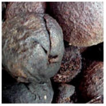Black Walnut Dark Balsamic Vinegar, 5 oz Case Pack 12 Bottles.